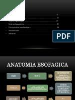 Anatomía esófago