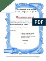 Informe Ensayo - Fiorela