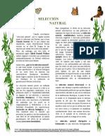 Selección Natural.docx