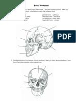 Bones Worksheet