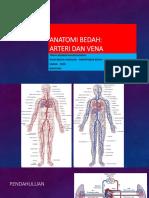 Anatomi Vascular