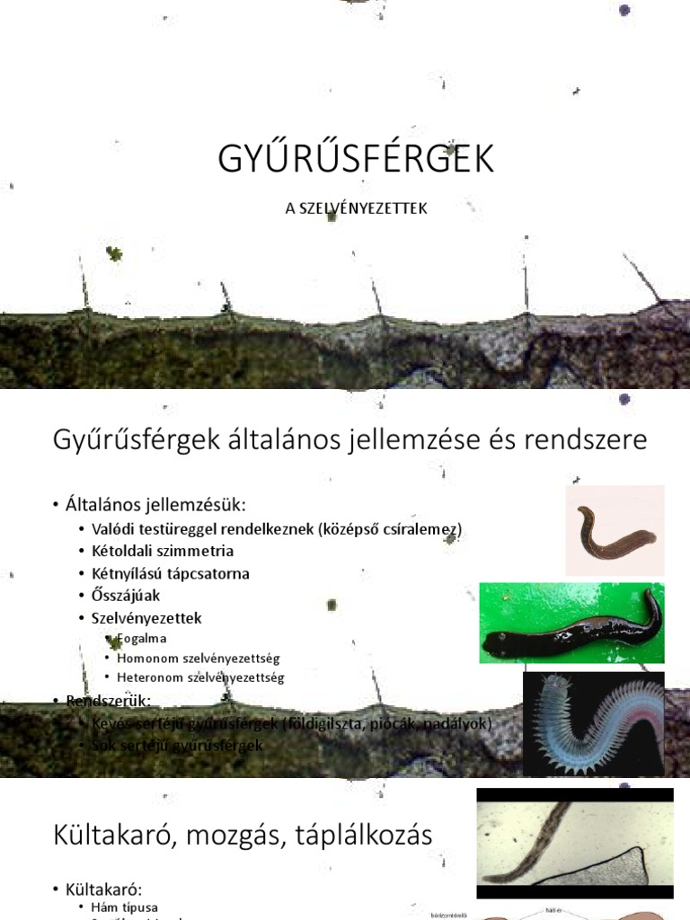 Gyurusfergek angolul. Tartalomjegyzék
