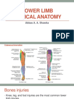 clinicalanatomy-170318191936