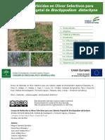 Ensayo de Herbicidas en Olivar Selectivos para una Cubierta Vegetal de Brachypodium distachyon.pdf