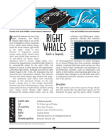 Sea Stats - Right Whales