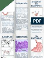 sistema digestivo animales