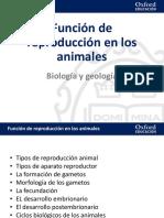 16 Presentacion Funcion Reproduccion Animales