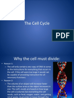 4 Cell Cycle New.pptx