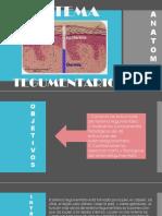 Sistema Tegumentario Diapositivas