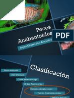 Los peces anabantiodrs.pdf