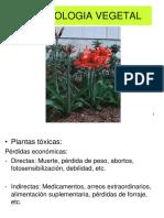 1. Toxicologia Vegetal