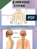 2 Human Body Nervous system.pptx