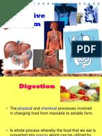 13. Digestive System