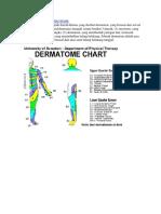 Dermatom.docx