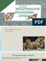 Enriquecimiento Ambiental TIGRE