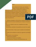 Tratamiento disortografía.docx