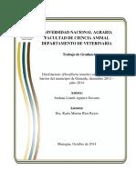 Dirofilaria canina