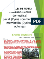bacterias.ppt