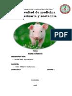 CERDOS INTROOO.docx