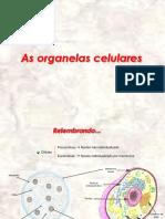 Membrana e Organelas - Biologia