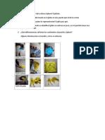 Actividad-1-De-la-esfera-al-plano-docx.docx