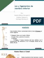 Huesos y Ligamentos MMII.pdf