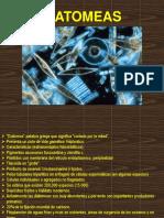 Diatomea Clase