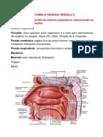 Questões Anato P2- Mód 2