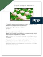 Proceso de Produccion de Las Lechugas Hidroponicas....11