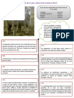 Formación de La Raza Ovina Junín Creada en Perú