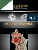 Anatomia Laringe PDF