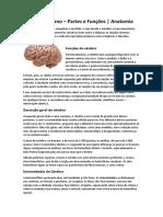 Cérebro Humano - ANATOMIA