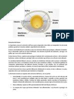 Estructura Del Huevo[1]