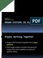 Snc2p u1l13 Organ Systems in Plants