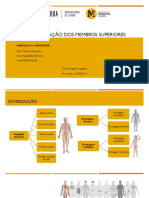 Apresentação - Vascularização Membro Superior-2-2
