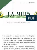 La Milpa 2013