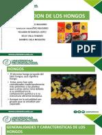 Nutrición de hongos