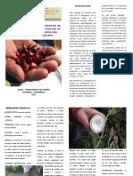 9. catalogo de diez especies semillas nativas suroccidente pdf-1.pdf