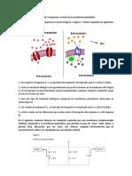 Actividad para trabajar CLASE MEMBRANA Y TRANSPORTE.pdf