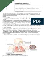 guia sistema respiratorio