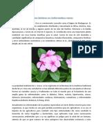 Efectos bióticos en Catharanthus roseus.docx