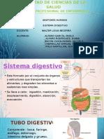 Sistema Digestivo 1 (1)