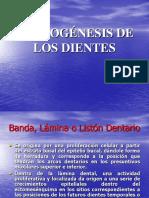 Odontogénesis-amelogenesis.ppt