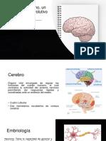 El Cerebro Humano, Un Acontecimiento Evolutivo Especial