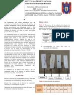 Separación de Fosfolipidos Por Cromatografía Final