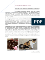 Síndrome de Klinefelter en felinos