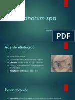 Urbanorum Spp