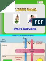 aparato_respiratorio_3eso.pdf