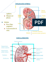 fisiologia-renal-1228525232975867-8