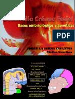 Embriogenetica Craneofacial